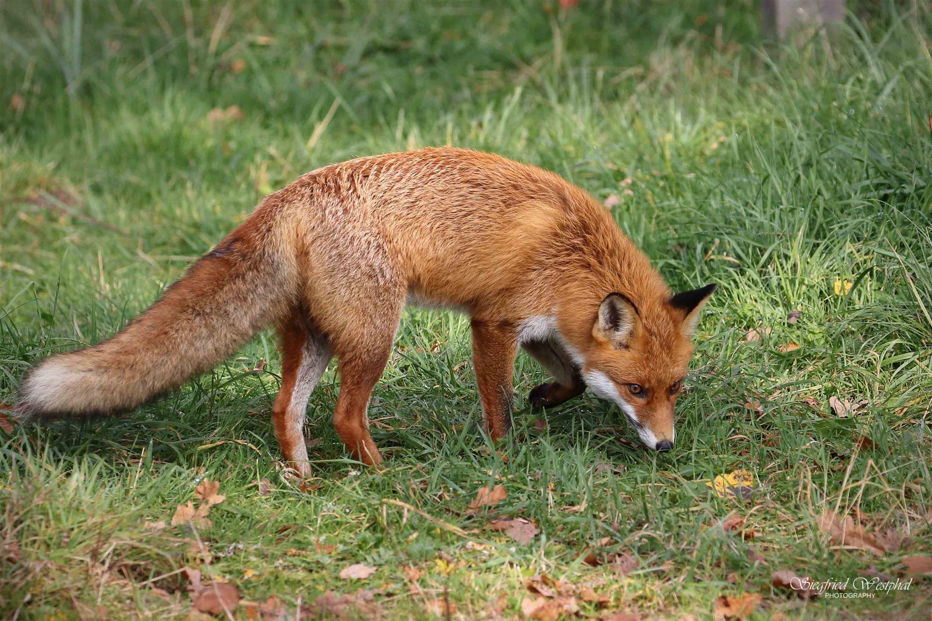 Am Schnellsten Technik Fuchs Zingst